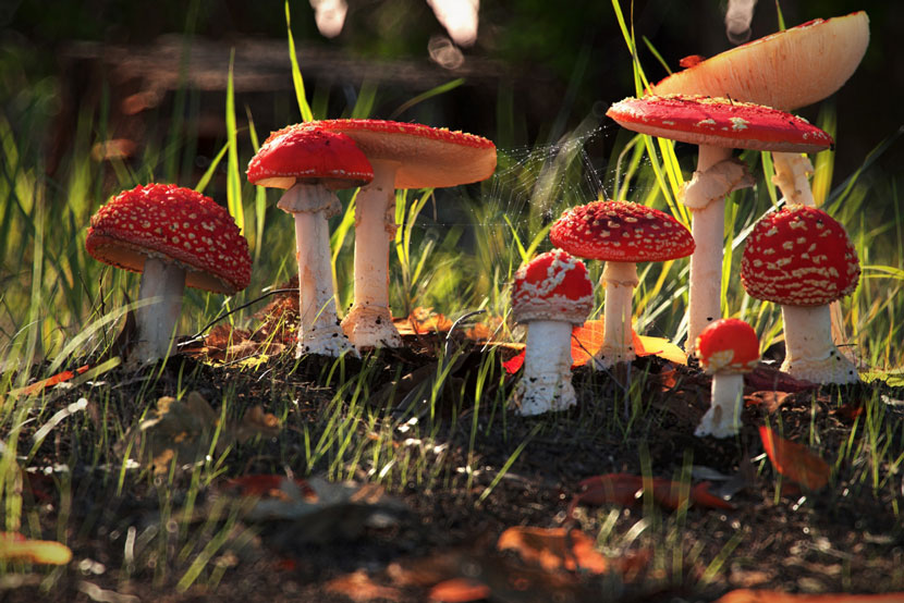 Natural Environment | 'Stumps, Mushrooms and Funghi' | Dan Woje